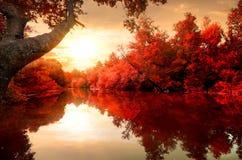 Красная осень на реке Стоковая Фотография RF