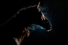 Красная лошадь в ноче под дождем и дымом стоковые изображения