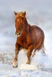 Красная лошадь в снеге стоковая фотография