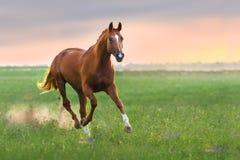Красная лошадь Стоковая Фотография