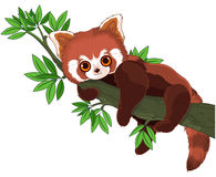 Красная панда бесплатная иллюстрация