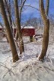 Красная покрытая невеста в древесинах Стоковое Фото