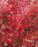 Красная предпосылка листьев осени красочная Стоковые Изображения RF