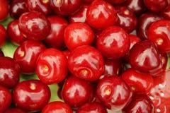 Красная предпосылка макроса вишен Стоковое Изображение RF