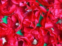 Красная предпосылка текстуры макроса цветка Hollyhock Стоковые Изображения