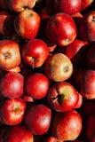 Красная предпосылка яблок Стоковые Изображения