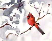 Красная птица иллюстрация штока