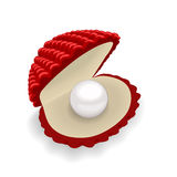 Красная раковина с жемчугом на белой предпосылке Стоковые Фотографии RF