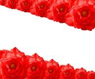 Красная рамка Rose Стоковое Фото