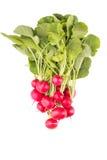 Красная редиска изолированная на белой предпосылке Стоковые Фото