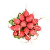 Красная редиска Стоковое фото RF