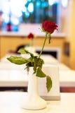 Красная роза в вазе на таблице на ресторане женщины романтичного захода солнца людей вечера солнца Фокус на красной розе Стоковое фото RF