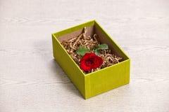 Красная роза в коробке Стоковое Изображение RF