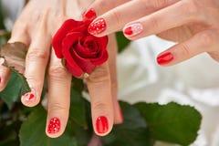 Красная роза в нежных женских руках Стоковое Изображение