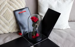 Красная роза в черном ящике как подарок, прочная подняла в склянку сохранено стоковое фото rf