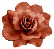 Красная роза изолированная цветком на белой предпосылке closeup элемент конструкции рождества колокола иллюстрация вектора