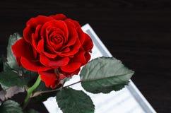 Красная роза и страница нот стоковые фото
