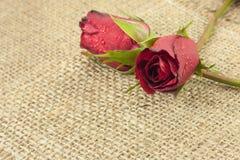 Красная роза на винтажной предпосылке дерюги Стоковые Фотографии RF