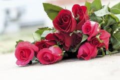 Красная роза на красивом стоковое фото