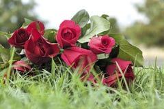 Красная роза на красивом стоковые фото