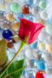 Красная роза на красочном стеклянном шарике Стоковые Изображения