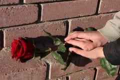 Красная роза на предпосылке кирпичной стены Рука человека лежит на руке женщины Принципиальная схема влюбленности День и 8-ое мар стоковое изображение