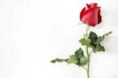 Красная роза на предпосылке стены Стоковая Фотография