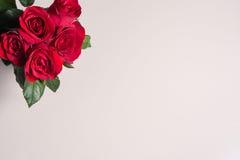 Красная роза на серой предпосылке стоковые изображения