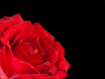 Красная роза на черных предпосылке, дне валентинки и концепции влюбленности Стоковые Фотографии RF