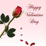 Красная роза с падая лепестками Стоковое Изображение
