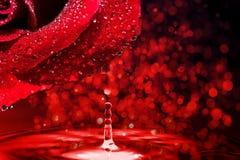 Красная роза с падением воды Стоковая Фотография