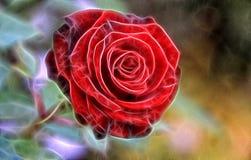 Красная роза фрактали стоковые изображения rf
