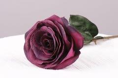 Красная роза Стоковые Фото
