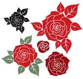 Красная роза Стоковое Фото