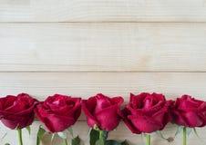 Красная роза 17 Стоковая Фотография RF