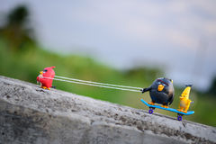 Красная сердитая тяга птицы его друзья вверх по холму при прикрепленная веревочка Стоковое Изображение RF