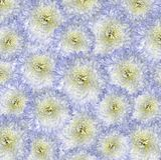Красная сине-желтая предпосылка Цветки букета светлых белых хризантем Конец-вверх Стоковая Фотография