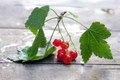 Красная смородина, ветвь на деревянной предпосылке Стоковое Изображение
