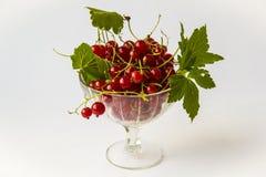 Красная смородина в вазе Стоковое Изображение