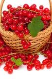 Красная смородина в корзине Стоковая Фотография