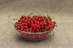 Красная смородина в шаре Стоковое Фото
