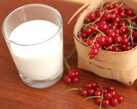 Красная смородина и стекло молока Стоковые Изображения