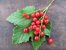 Красная смородина на зеленых лист Стоковые Изображения