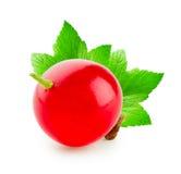 Красная смородина с 2 зелеными листьями Стоковое Изображение RF