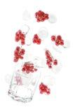Красная смородина с льдом Стоковое Изображение RF