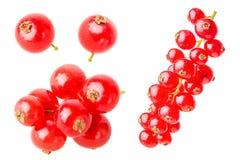 Красная смородина стоковые фото