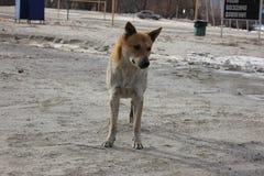 Красная собака на банке реки зимы стоковое фото