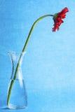 Красная текстура воды вазы цветка маргаритки Gerbera стоковое изображение