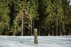 красная тропа в зиме стоковая фотография
