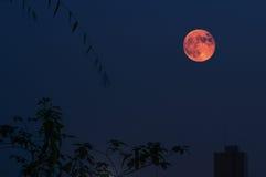 Красная луна в лунном затмении Стоковая Фотография RF